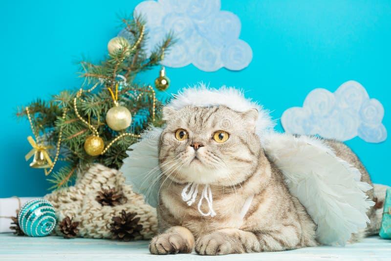 O anjo do Natal é um gato bonito, com as asas no fundo de uma árvore de Natal decorada Ano novo e Natal feliz imagens de stock