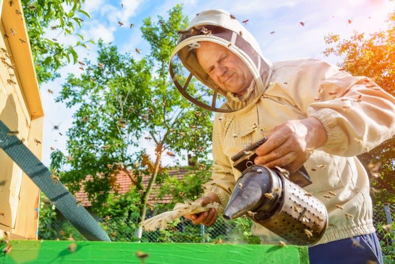 O apicultor está trabalhando com abelhas e colmeias no apiário Apicultura foto de stock