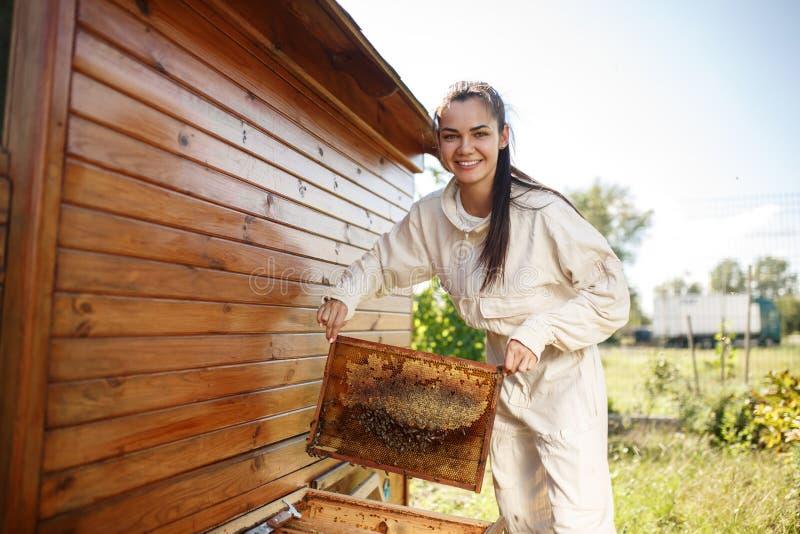 O apicultor fêmea novo retira da colmeia um quadro de madeira com favo de mel Recolha o mel Conceito da apicultura fotos de stock royalty free