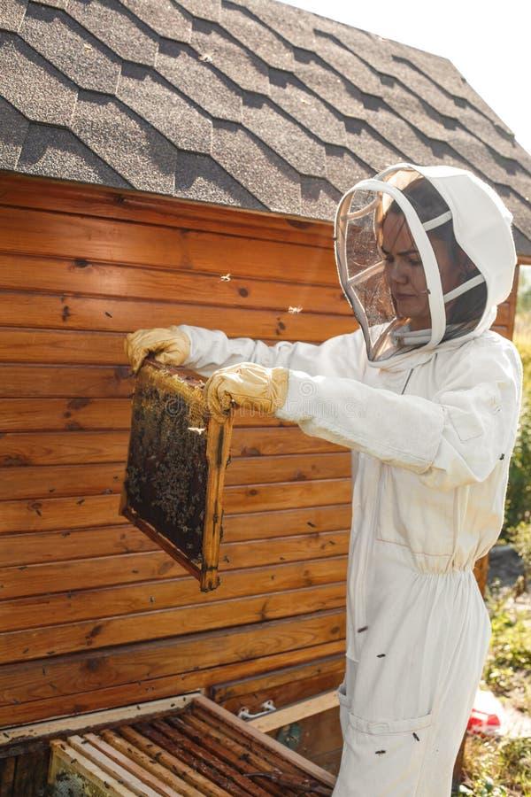 O apicultor retira da colmeia um quadro de madeira com favo de mel Recolha o mel Conceito da apicultura fotos de stock royalty free