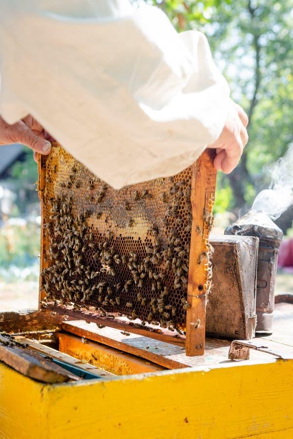 O apicultor verifica a colmeia Olha as abelhas ao sol fotografia de stock