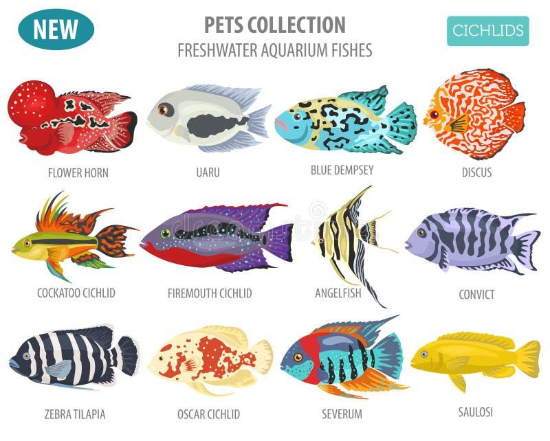 O aquário de água doce pesca o estilo liso ajustado o do ícone das raças ilustração royalty free