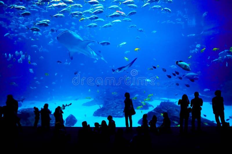 O aquário o mais grande no mundo. Atlanta, Geórgia. fotografia de stock royalty free
