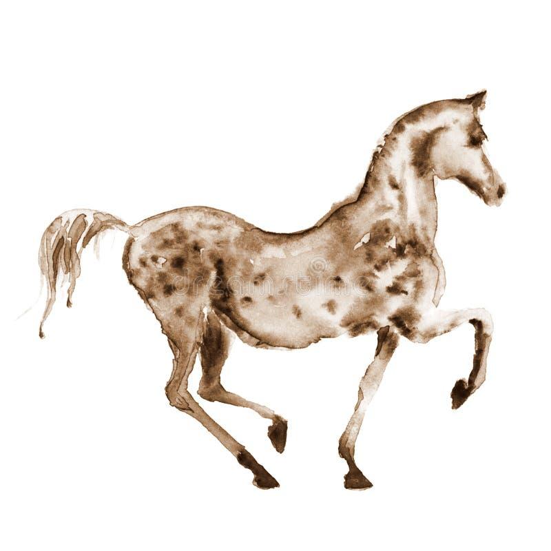 O arabian de tiragem da mão da aquarela do Sepia dapple o cavalo cinzento no movimento no branco ilustração royalty free