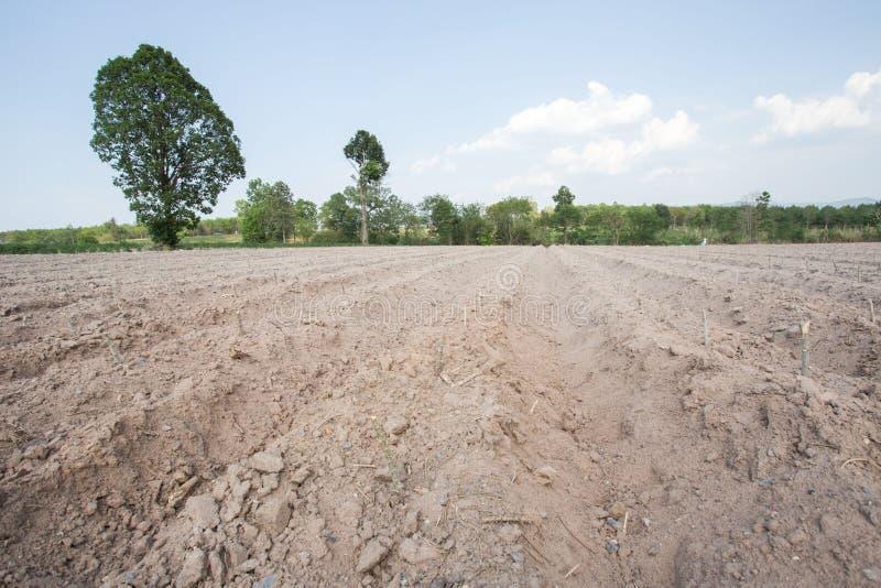 O arado da agricultura prepara o solo para come?a a plantar a terra do campo da mandioca ilustração stock