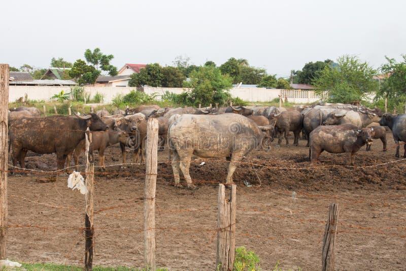 O arame farpado foi usado para quarantine animais fotografia de stock royalty free
