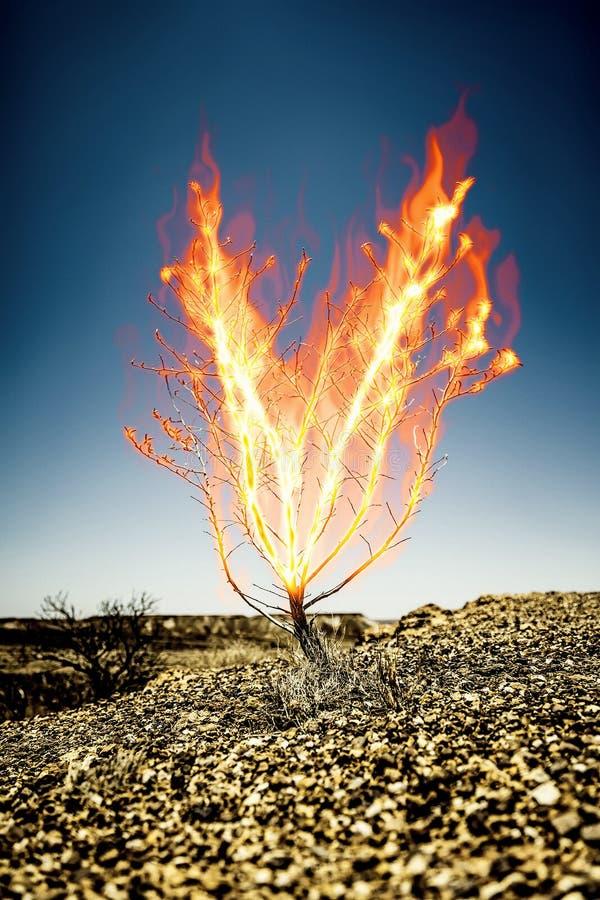 O arbusto ardente do espinho ilustração stock