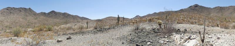 O Arizona, parque sul da montanha, Saguaro e cacto do chollo no deserto na montanha sul imagens de stock