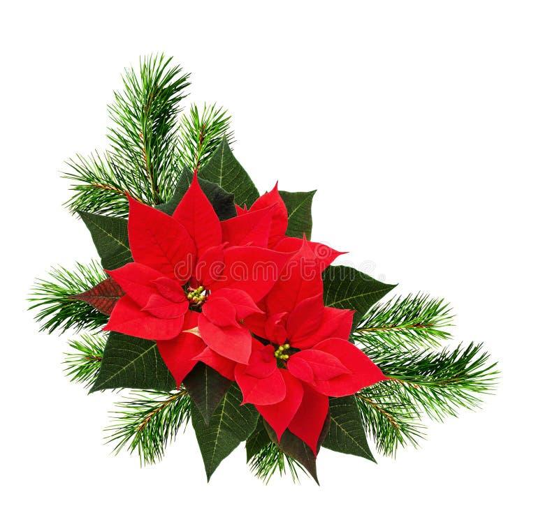 O arranjo de canto do Natal com galhos do pinho e a poinsétia fluem imagens de stock royalty free