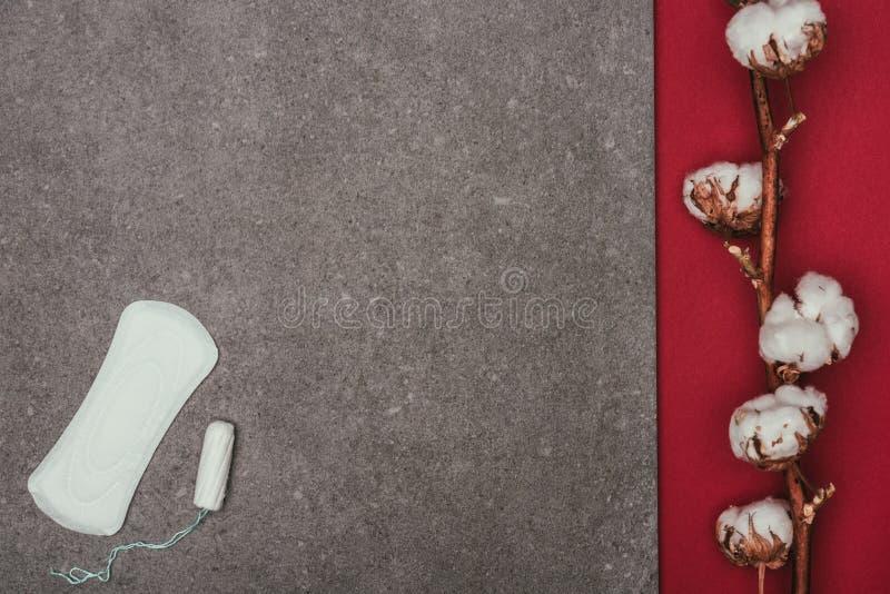 O arranjo do galho do algodão, a almofada menstrual e o tampão no cinza surgem imagens de stock royalty free