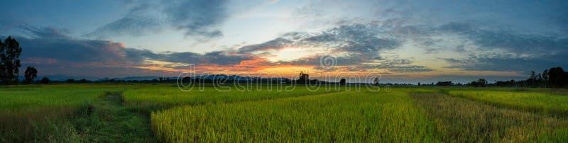 O arroz bonito de Tailândia da paisagem do campo de almofada coloca o panorama do por do sol do nascer do sol fotos de stock royalty free