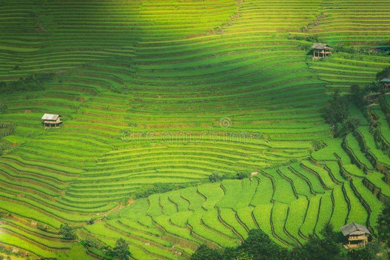O arroz coloca em MU Cang Chai YenBai, Vietname foto de stock