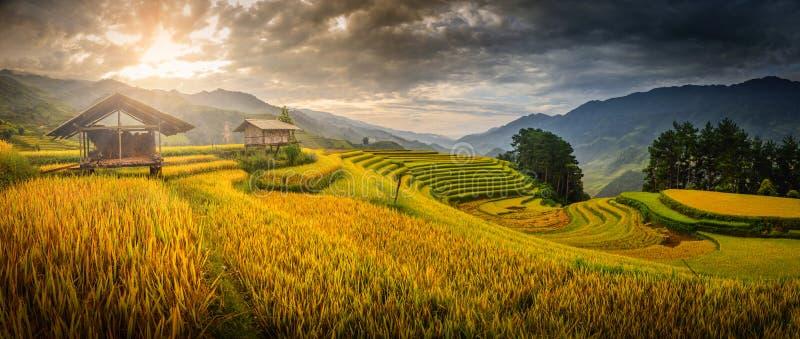 O arroz coloca em terraced com o pavilhão de madeira na manhã em M fotos de stock royalty free
