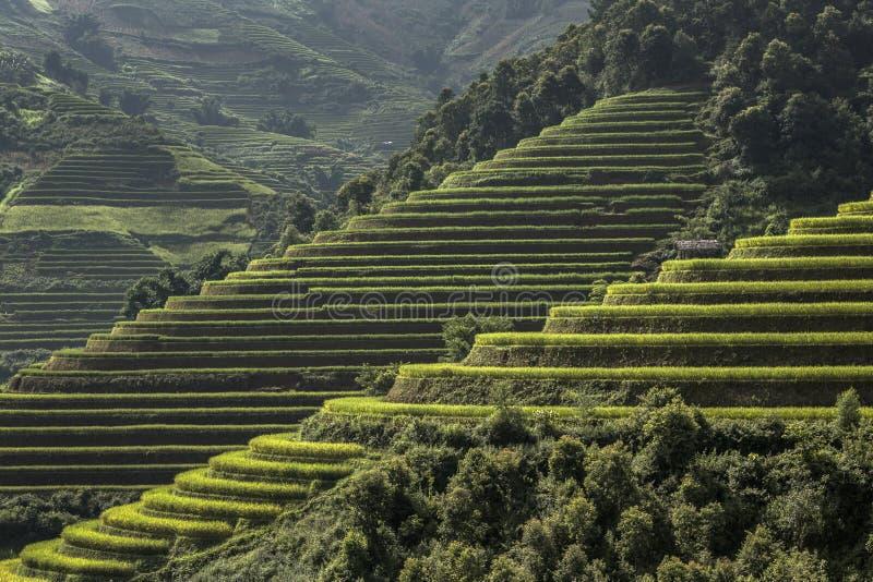 O arroz coloca em terraced de MU Cang Chai, Vietname imagens de stock
