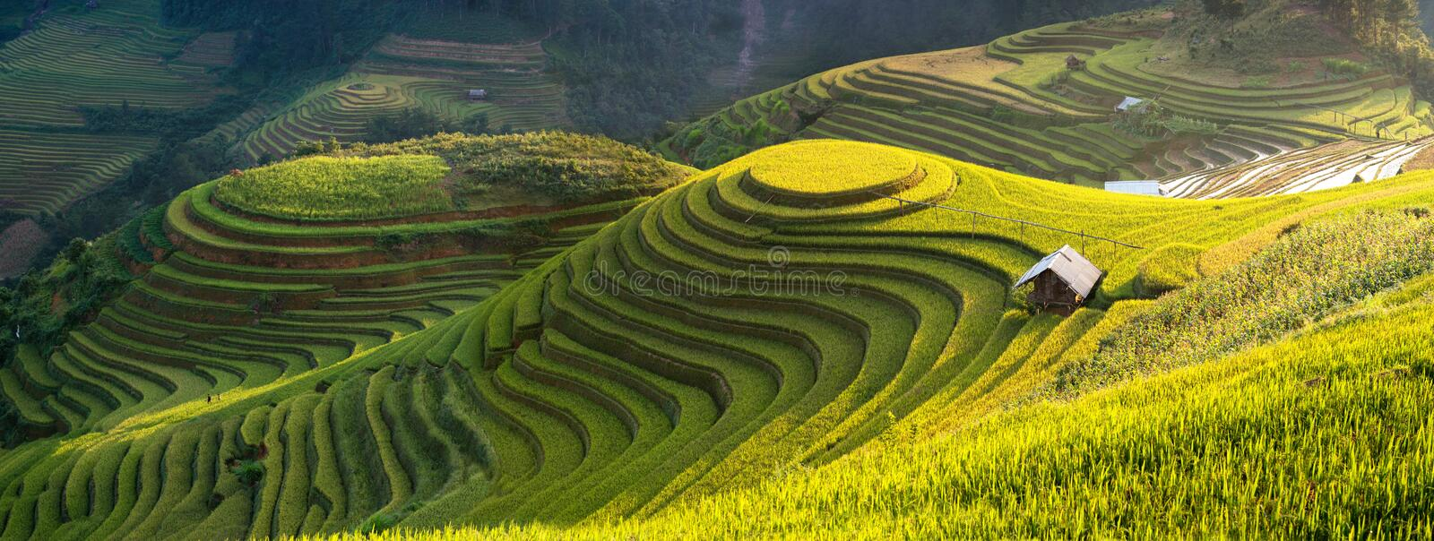 O arroz coloca em terraced de MU Cang Chai, YenBai, Vietname foto de stock royalty free