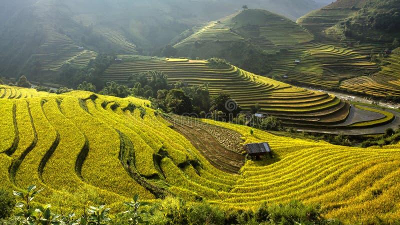 O arroz coloca em terraced de MU Cang Chai, YenBai, Vietname fotos de stock royalty free