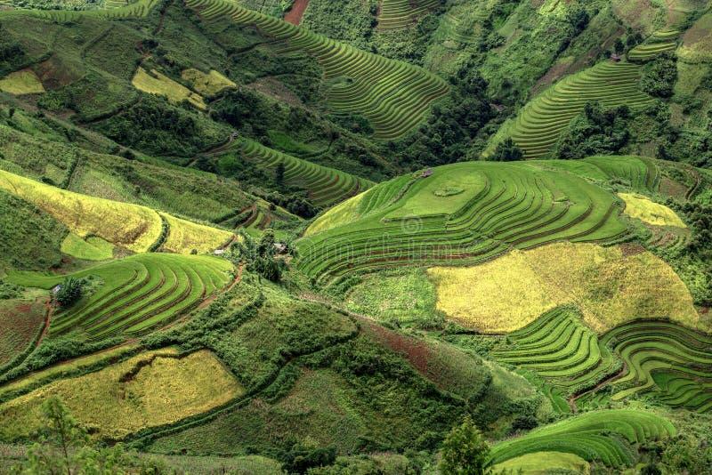 O arroz coloca em terraced de MU Cang Chai, YenBai, Vietname Arroz f imagem de stock
