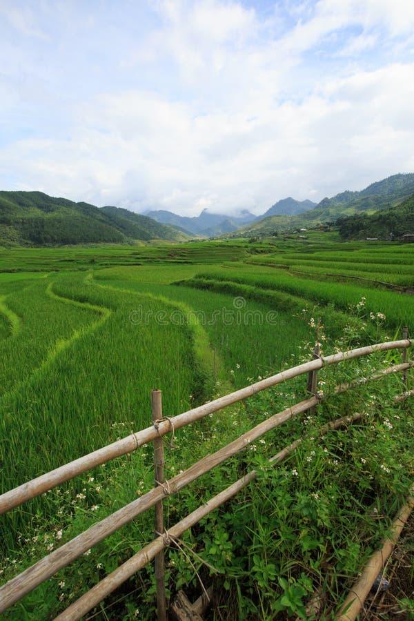 O arroz coloca em terraced de Xa Nam Bung, Vietname fotografia de stock royalty free
