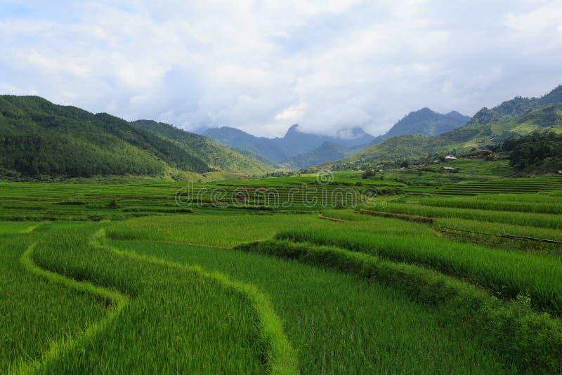 O arroz coloca em terraced de Xa Nam Bung, Vietname imagem de stock