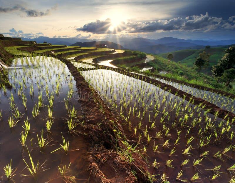 O arroz coloca em terraced em Chiang Mai, Tailândia imagem de stock