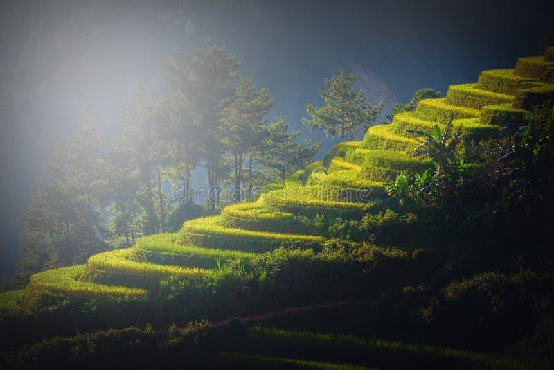 O arroz coloca em terraced no por do sol em MU Cang Chai, YenBai, Vietn imagem de stock royalty free