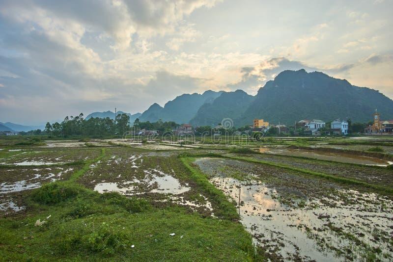 O arroz coloca perto do por do sol com as montanhas no fundo no parque nacional do golpe de Phong Nha KE, Vietname com copyspace fotografia de stock