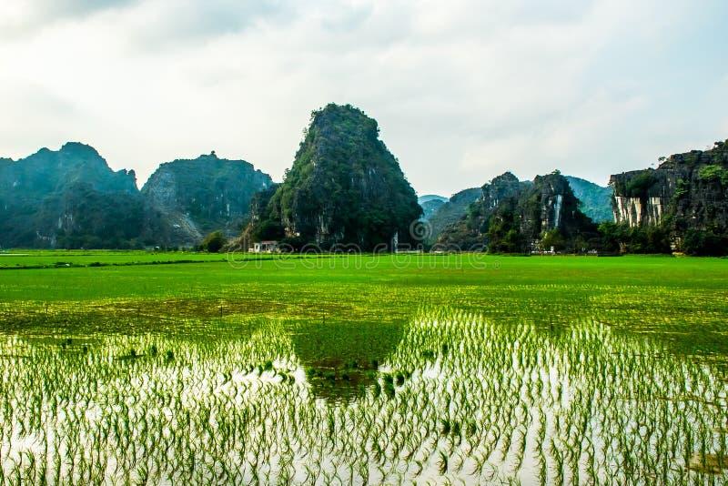 O arroz coloca, Tam Coc, Ninh Binh, paisagens de Vietname fotografia de stock royalty free