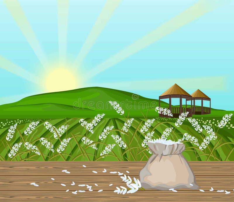 O arroz coloca o vetor da paisagem Fundo da luz do sol ilustração do vetor