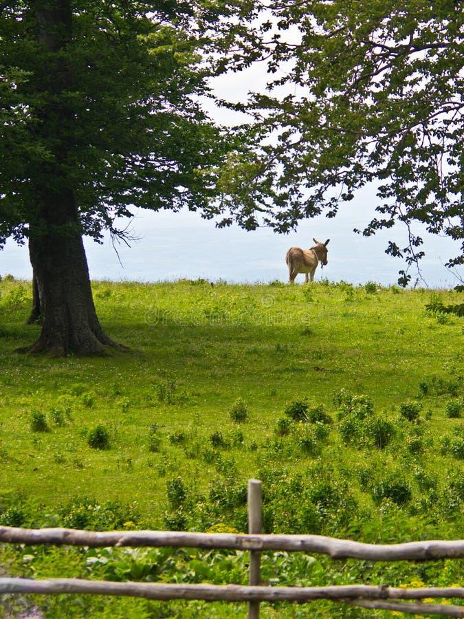 O asno aprecia a opinião da paisagem e uma grama verde fora do curso foto de stock