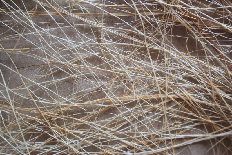 O assoalho após uma linha pequena de bambu fotos de stock