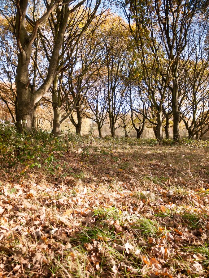 O assoalho da floresta do outono caído sae do fundo da paisagem das árvores fotografia de stock