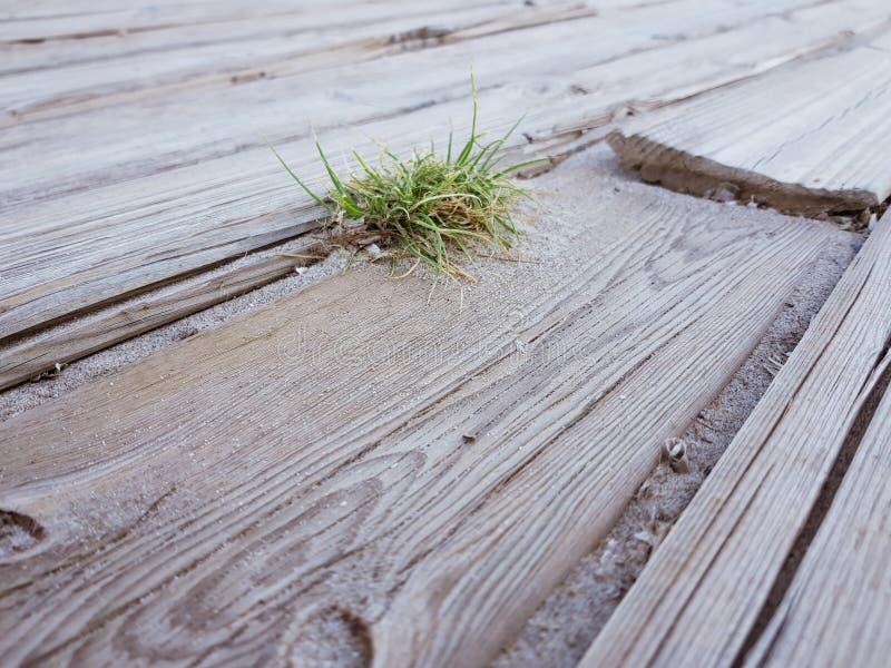 o assoalho r?stico de madeiras claras e de uma planta pequena e solit?rio ? nascido no meio das venezianas Imagem tomada na praia foto de stock