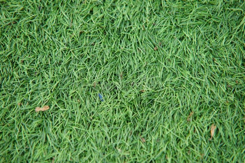 O atletismo artificial com grama verde combinou com a grama artificial fotos de stock royalty free