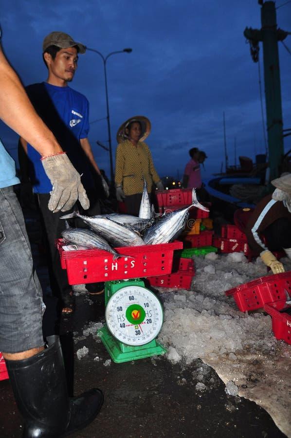 O atum está sendo pesado no porto de Hon Ro ao caminhão a uma fábrica de tratamento local na cidade de Nha Trang imagem de stock royalty free