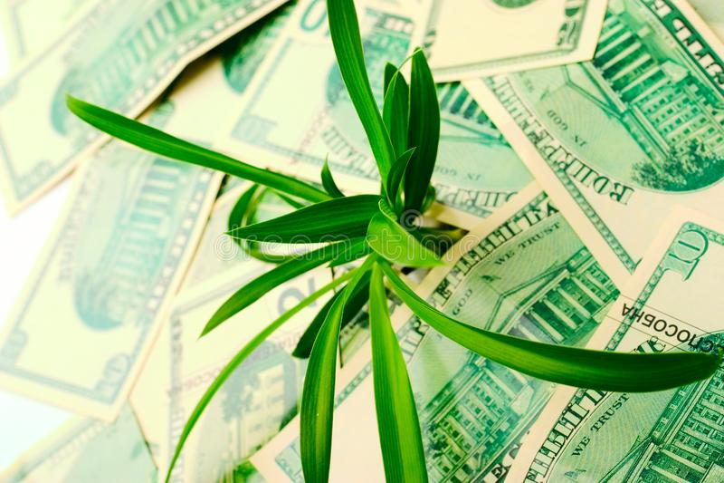 O aumento em citações do dólar