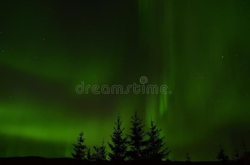 O aurora borealis surpreendente que dança na estrela encheu o céu noturno do outono sobre árvores spruce imagem de stock