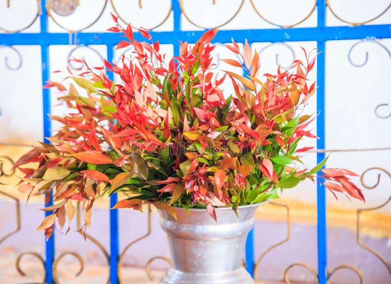 O australe do Syzygium escova a cereja, esfrega a cereja, angra lilly pilly, satinash da angra, o watergum é arbusto da floresta  imagens de stock