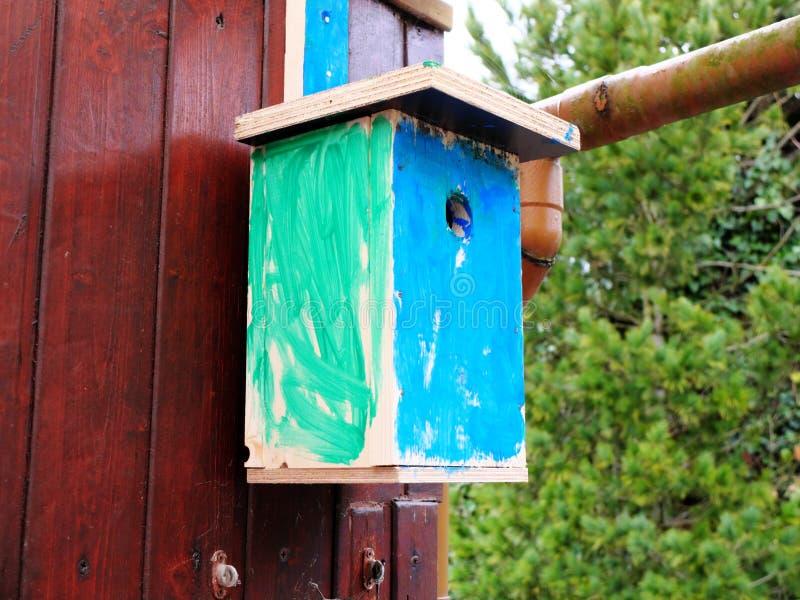 O auto fez o aviário pintado por uma criança na suspensão verde e azul na parede de madeira O conceito do desenvolvimento adianta fotos de stock royalty free