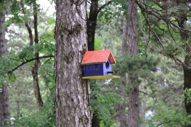 O aviário de madeira brilhante montou em uma árvore na floresta verde imagem de stock