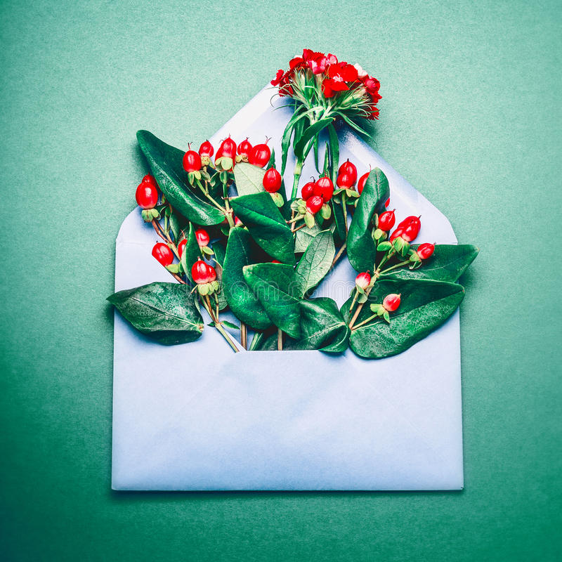O azul abriu o envelope com as bagas e ramos vermelhos de Rowan do outono no fundo verde foto de stock