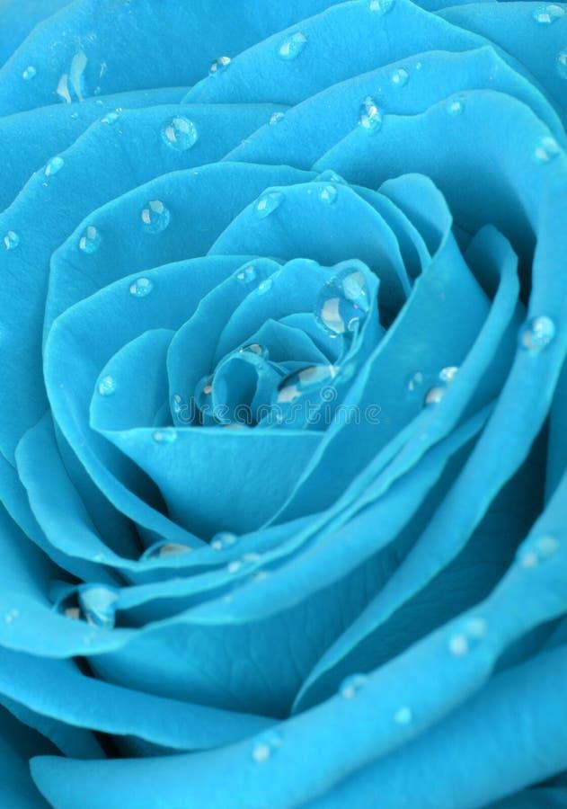 O azul levantou-se com gotas da água fotografia de stock