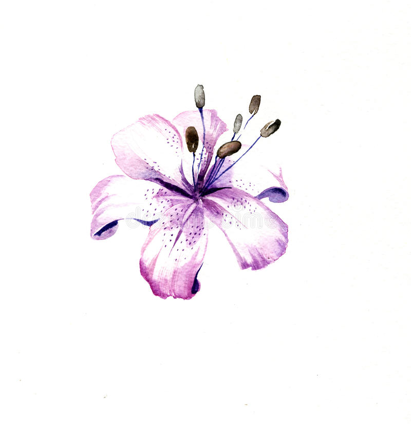 O azul - o lírio roxo floresce a aquarela ilustração royalty free