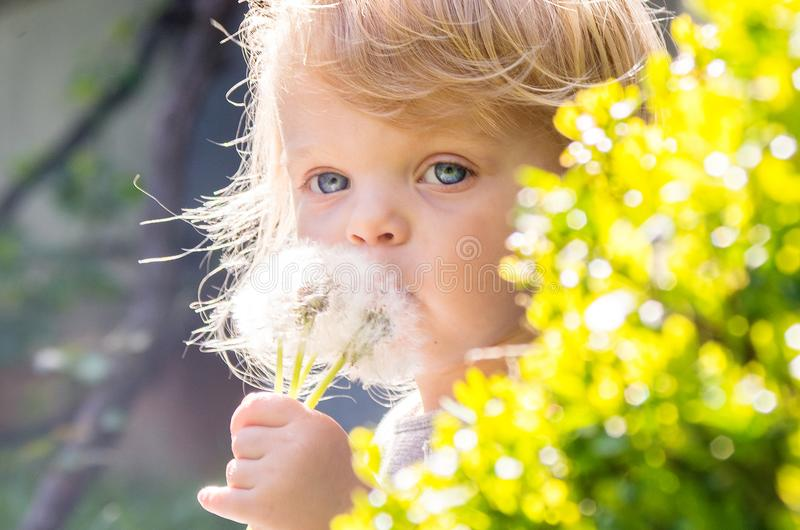 O azul pequeno do retrato eyed a menina loura que funde um dente-de-leão da flor foto de stock royalty free