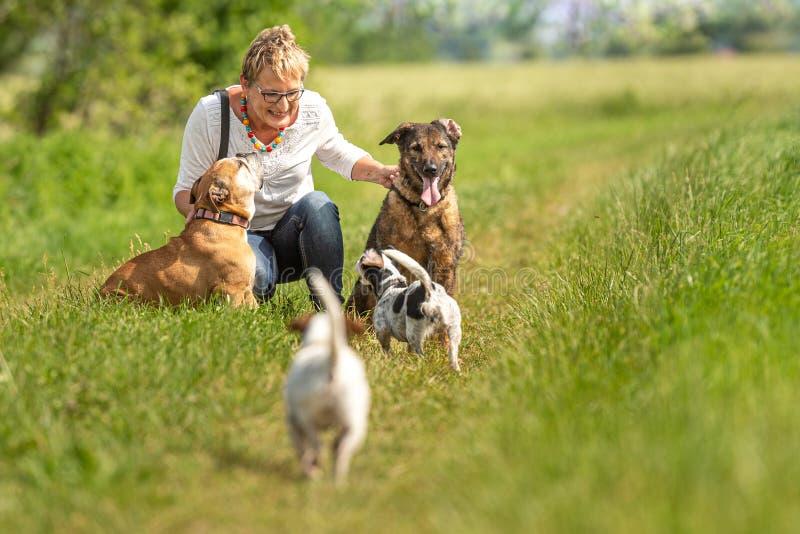 O baby-sitter do cão está andando com muitos cães em uma trela Caminhante do cão com raças diferentes do cão na natureza bonita imagem de stock royalty free