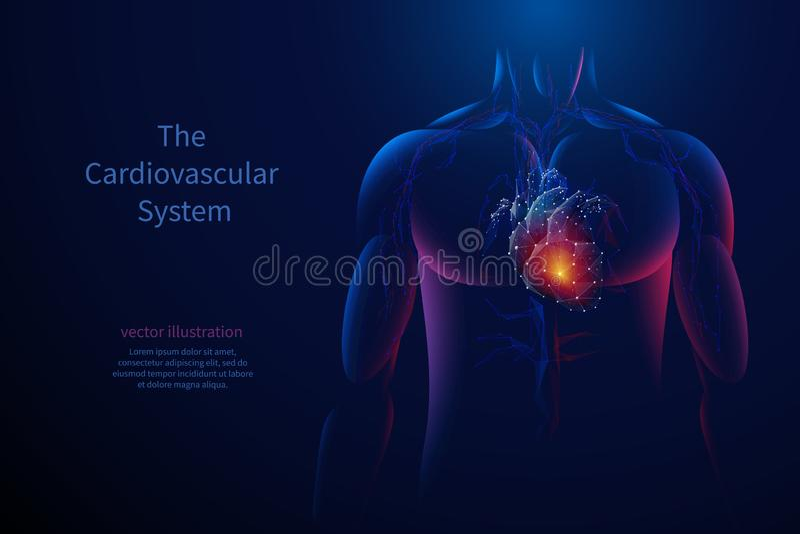 O baixo poli do sistema cardiovascular ilustração stock