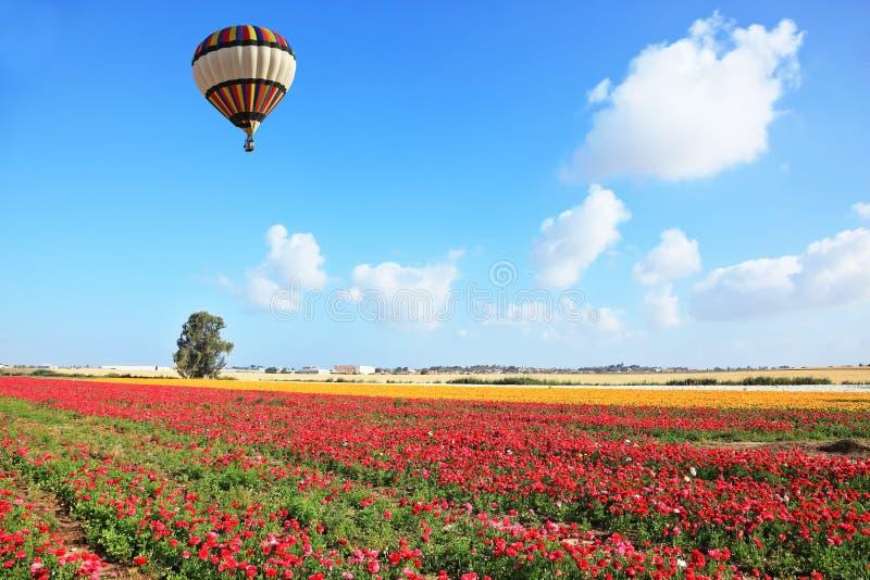 O balão listrado brilhante voa sobre um campo fotos de stock royalty free