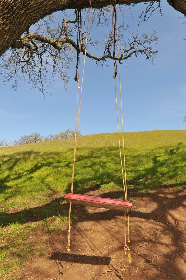 O balanço vermelho da árvore pendura de uma grande filial do carvalho fotos de stock royalty free