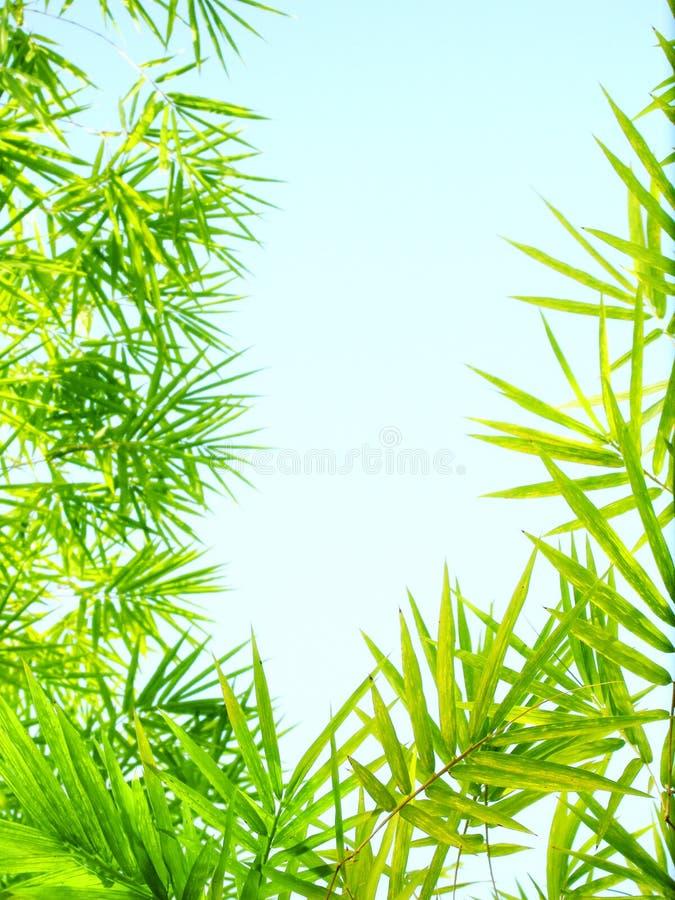 O bambu da luz solar sae do quadro fotografia de stock royalty free