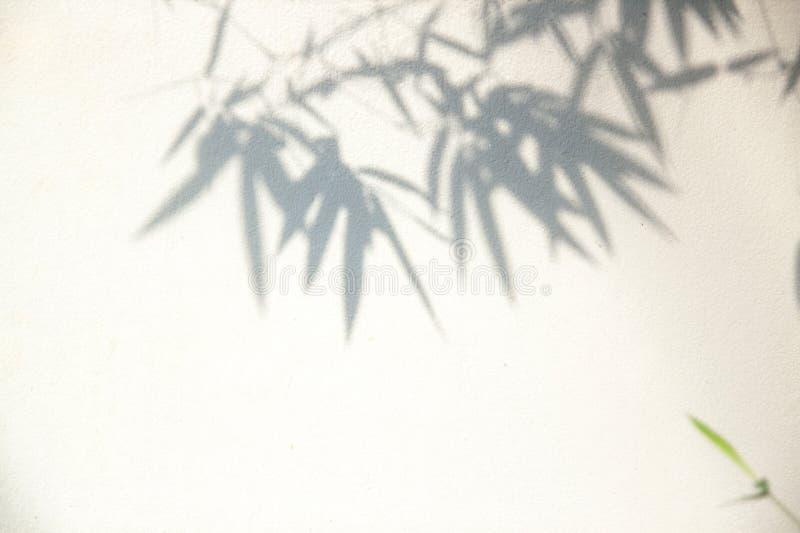 O bambu verde deixa deixar sombras contra um foco macio na parede branca imagens de stock