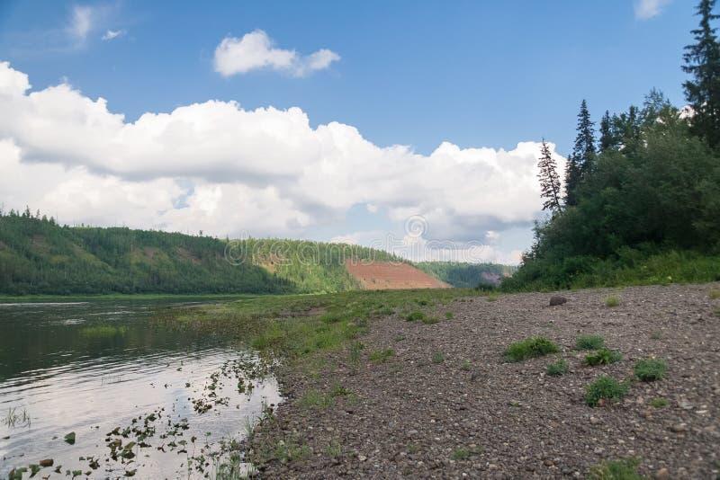 O banco arenoso do rio Afluente de Yenisey River fotos de stock